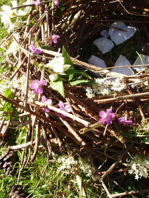 Birds_nest_detail