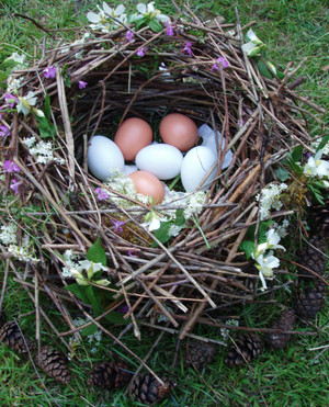 Birds_nest_with_eggs